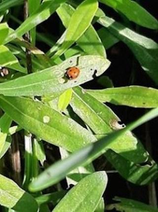 Ladybird picture